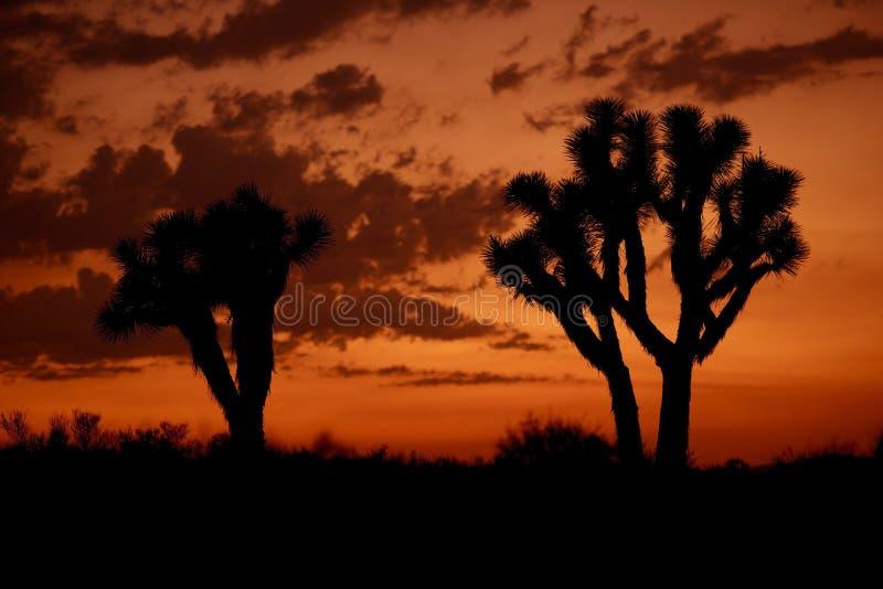 莫哈韦沙漠日落 免版税库存照片