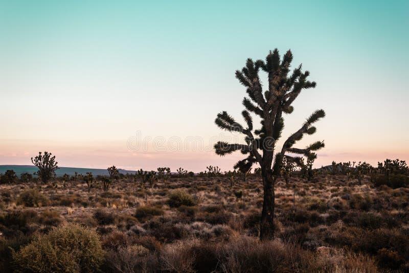 莫哈维沙漠近的路线66在加利福尼亚 免版税库存照片