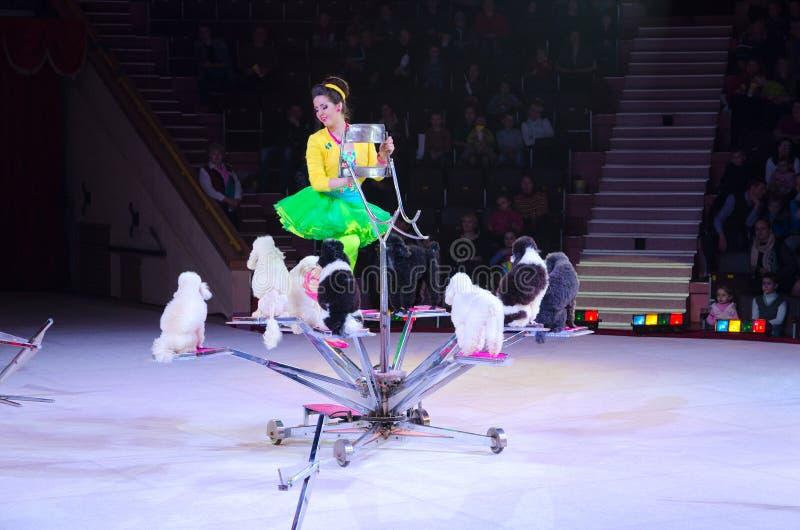 莫斯科马戏游览在冰的 训练的狗 免版税库存图片