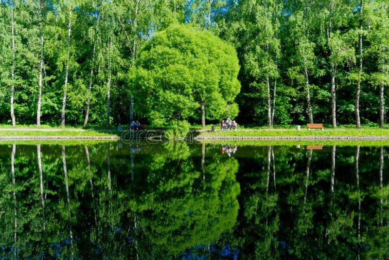 莫斯科/俄罗斯-绿色树的反射在池塘的,安静从池塘岸的春天视图 库存图片