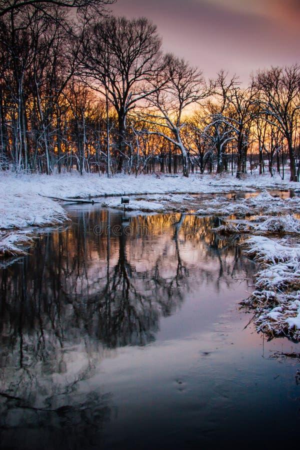 莫顿树木园在冬天 免版税库存照片
