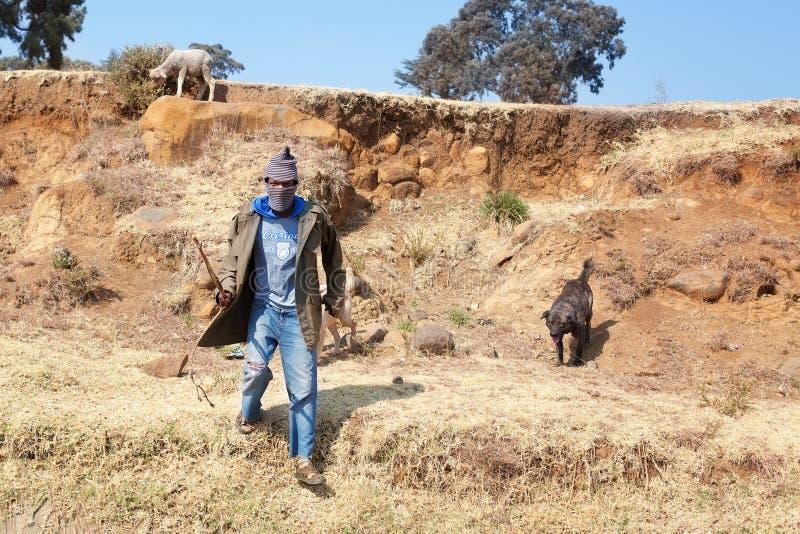 莱索托,全国羊毛巴拉克拉法帽、狗和绵羊的,岩石石倾斜德肯斯伯格山天空蔚蓝非洲年轻牧羊人人 免版税库存图片