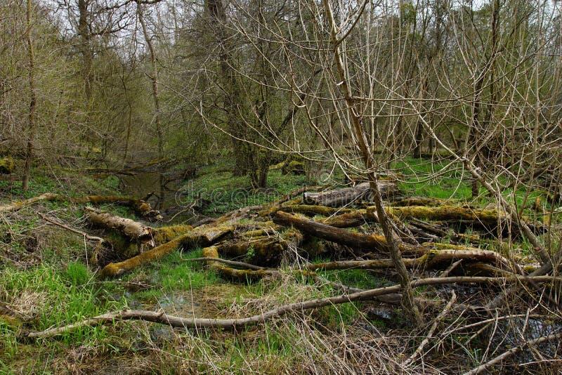莱茵河洪泛区 库存照片