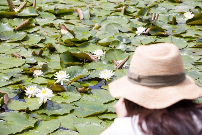 莲花植物在千叶公园 免版税图库摄影