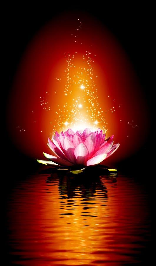 莲花的图象在水的 向量例证