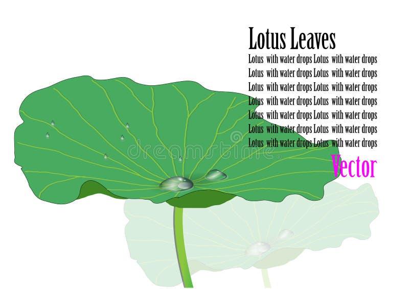 莲花离开绿色设计水滴水,传染媒介例证 库存例证