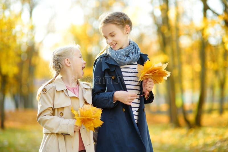 获得两个逗人喜爱的年轻的姐妹乐趣在美好的秋天天 使用在秋天公园的愉快的孩子 会集黄色秋天的孩子 免版税图库摄影