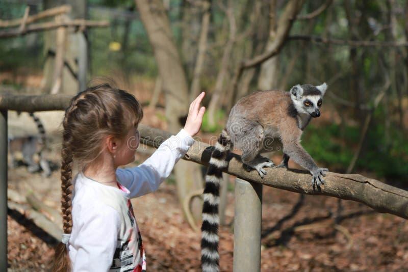 获得孩子的女孩与环纹尾的狐猴selfie室外照片的动物的乐趣 库存图片