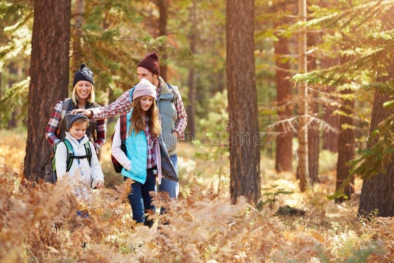 获得的家庭远足通过森林,加利福尼亚,美国的乐趣 库存图片