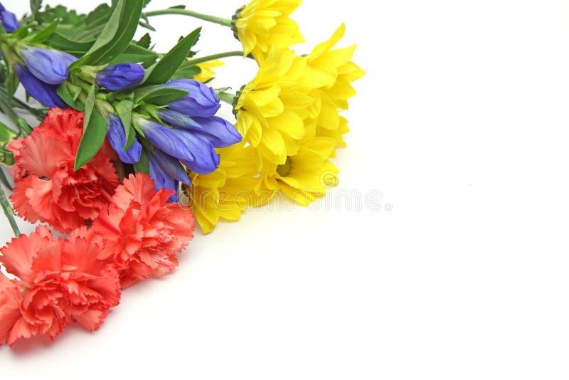 菊花、康乃馨和植物花束在白色背景中 免版税库存图片