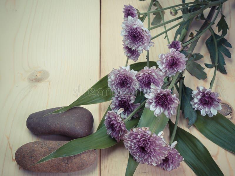 菊花五颜六色的花 免版税图库摄影