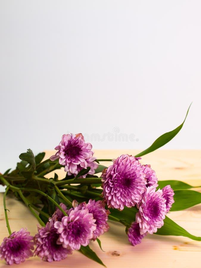 菊花五颜六色的花 库存图片