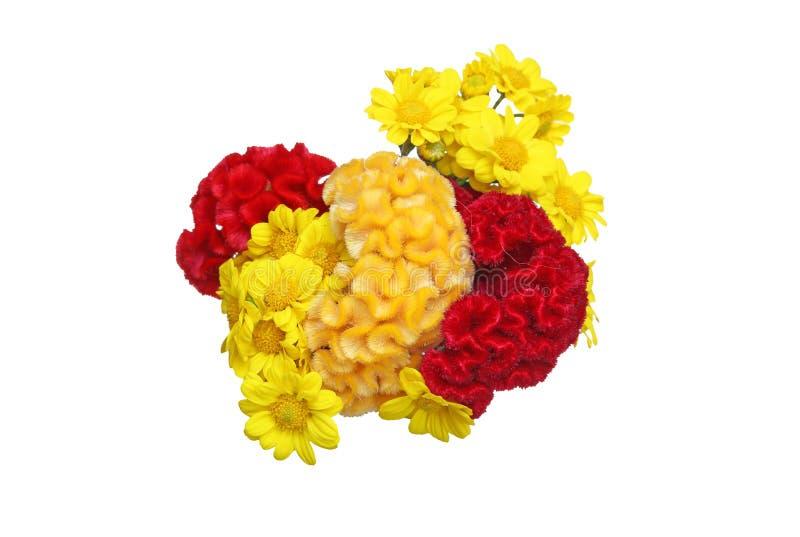 菊花和饰以羽毛的cockscomb花束  库存图片