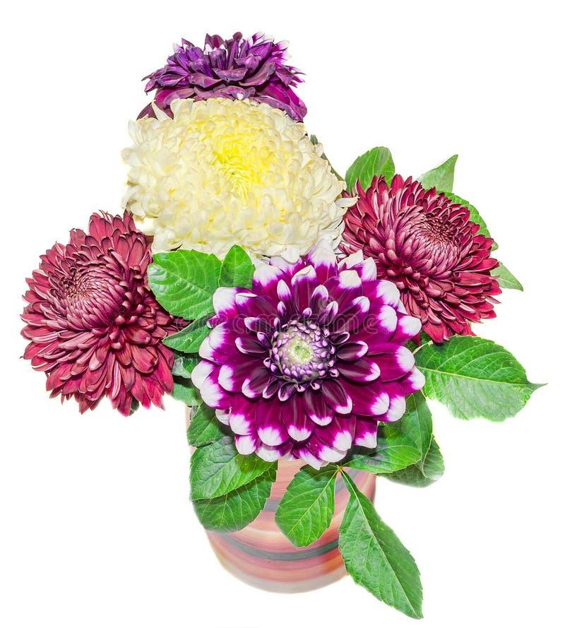 菊花和dhalia紫色和黄色花,细节 库存图片