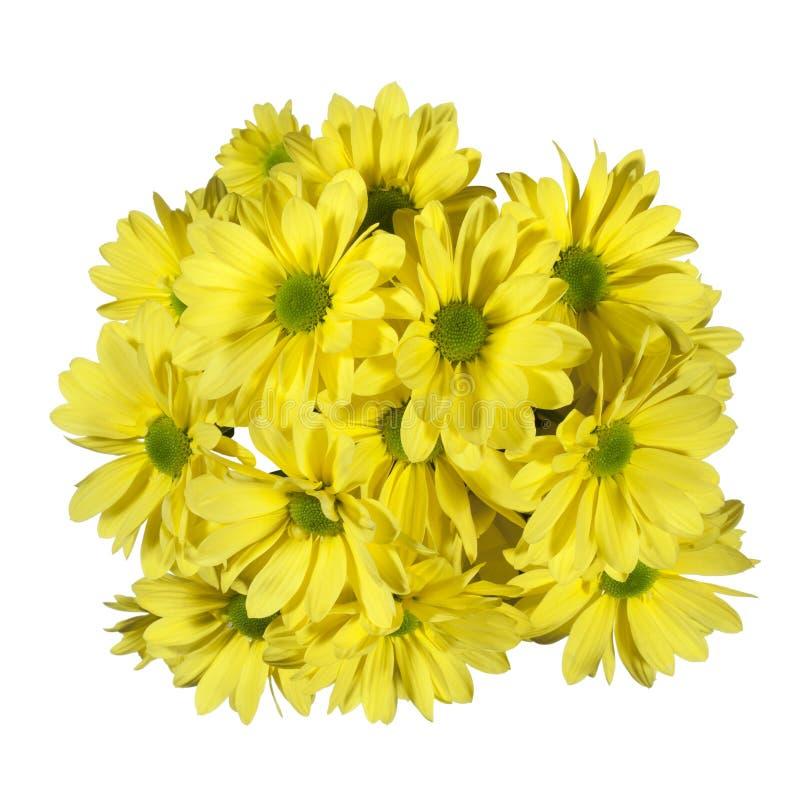Download 菊花开花黄色 库存照片. 图片 包括有 黄色, 开花的, 查出, 细微差异, beautifuler, 空白 - 62528214