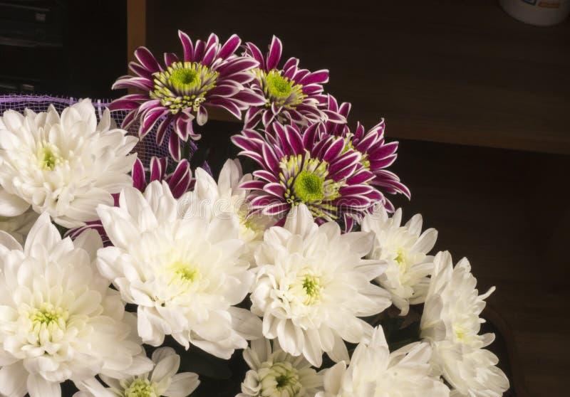 从菊花的花束颜色 免版税库存图片