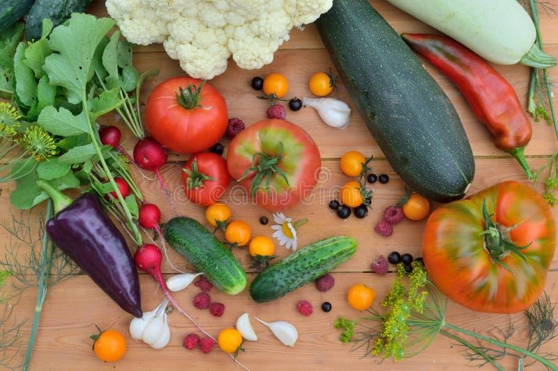 菜和果子一片新的庄稼  库存照片