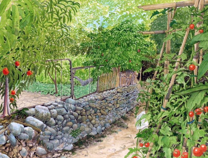 Download 菜园(Hortes能帕米) 库存例证. 插画 包括有 横向, 水彩, 工厂, 图画, 绘画, 庭院, 本质 - 30337054