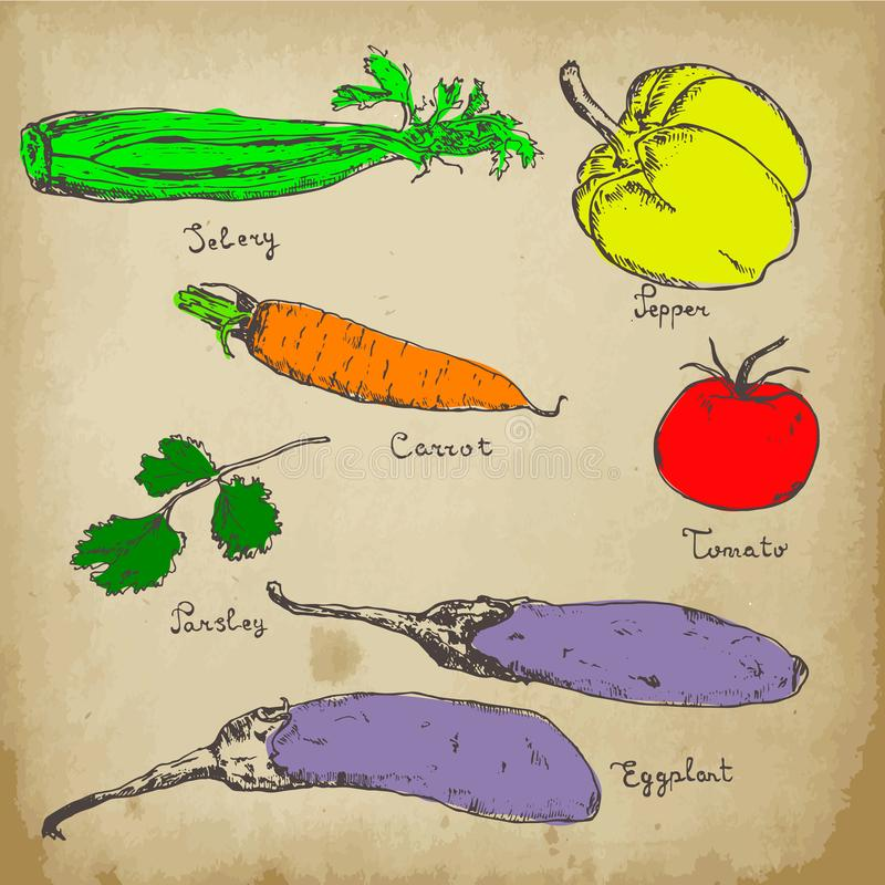菜在葡萄酒背景的色的手拉的墨水剪影 设置各种各样的有机蔬菜 剪影不同 皇族释放例证