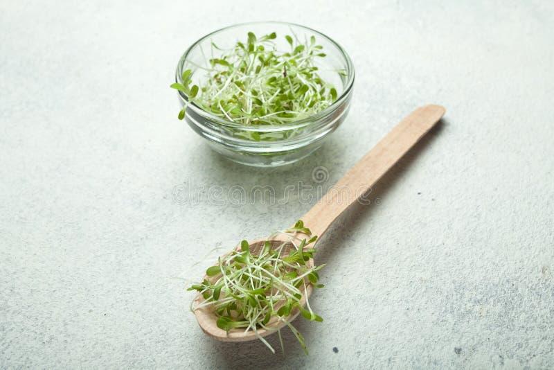 菜有机新芽在一把木匙子的在白色葡萄酒背景 维生素和抗氧剂的食物富有 免版税库存照片
