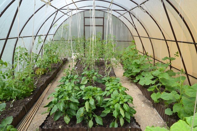 菜的耕种自从多孔的聚碳酸酯纤维的温室 免版税库存照片