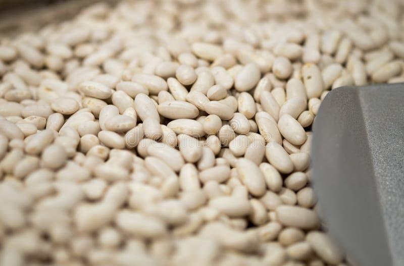 菜豆或扁豆或者珍珠扁豆Macroshot  库存图片