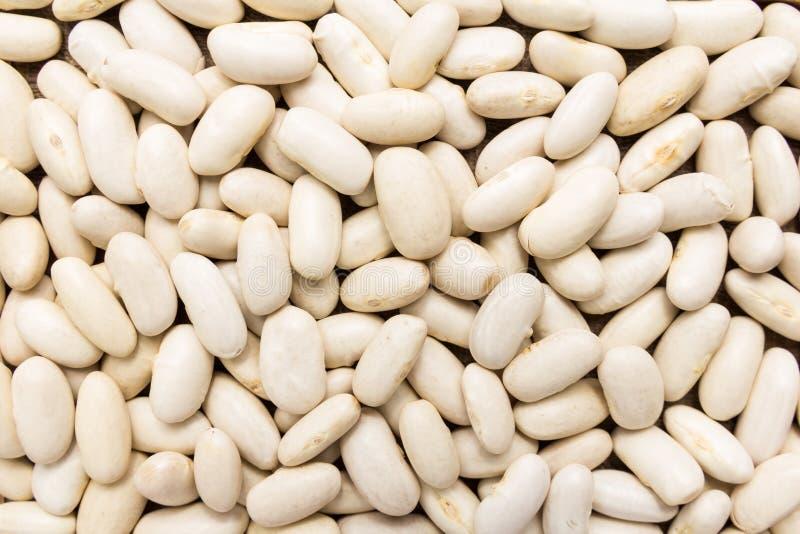 菜豆豆类 五谷特写镜头,背景用途 免版税图库摄影