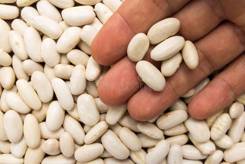 菜豆豆类 有五谷的人在手中 宏指令 整个食物 库存照片