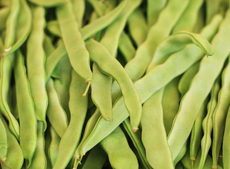 菜豆 免版税库存图片