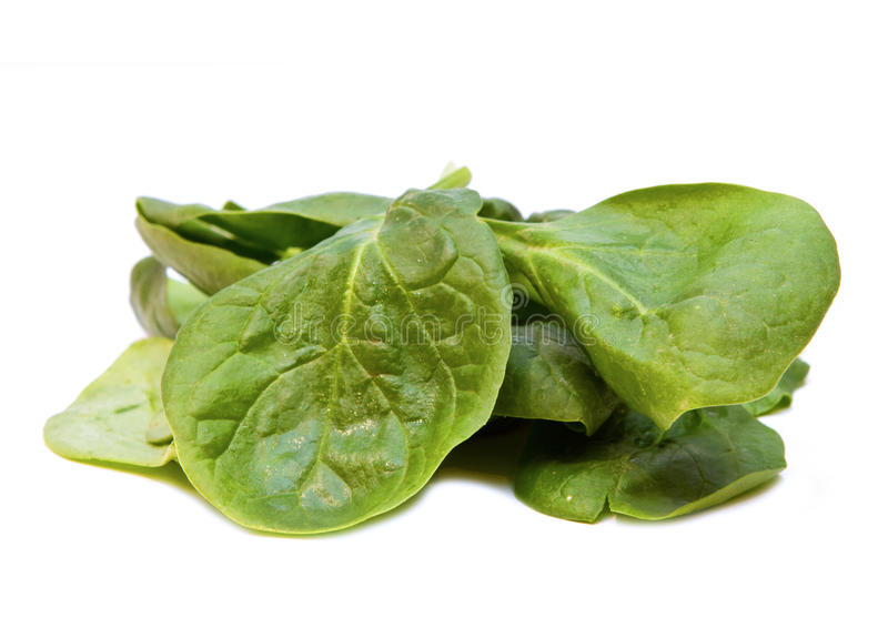 菠菜2 库存图片