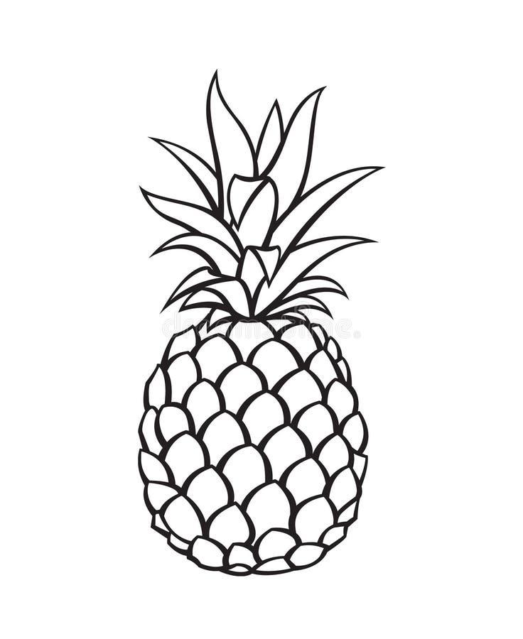 菠萝果子的图象 向量例证