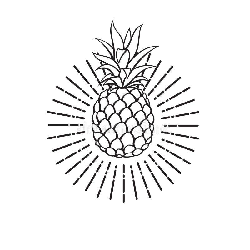 菠萝果子的图象 库存例证