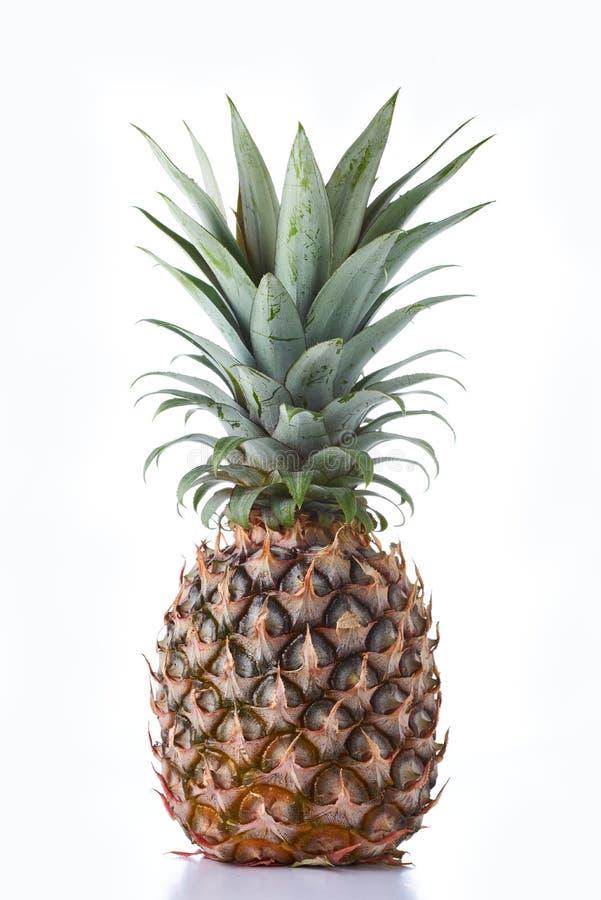 菠萝果实 免版税库存照片