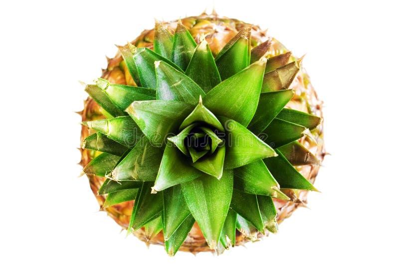 菠萝白色 免版税库存照片