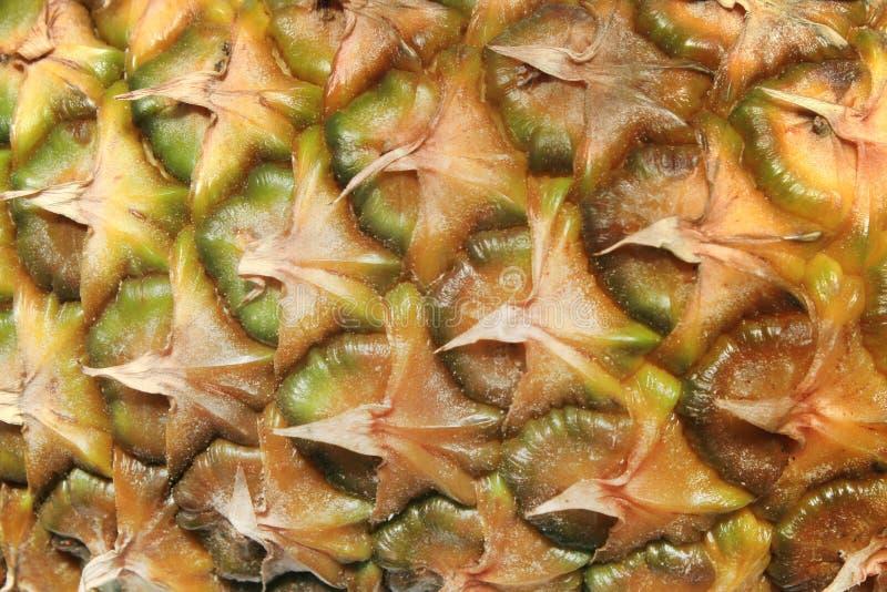 菠萝皮肤纹理特写镜头 背景美好的自然菠萝纹理 免版税库存照片