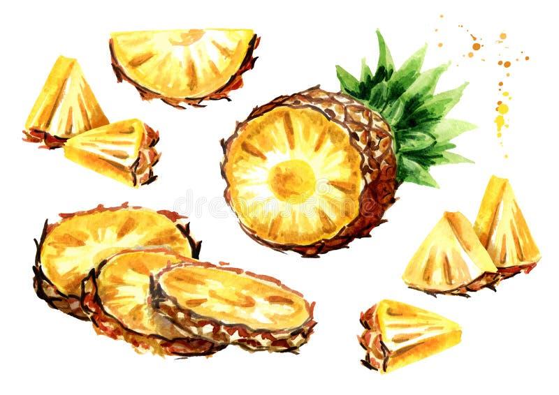菠萝集合 水彩手拉的例证,隔绝在白色背景 向量例证