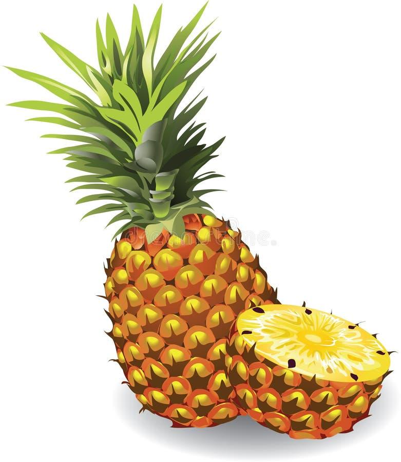 菠萝 向量例证