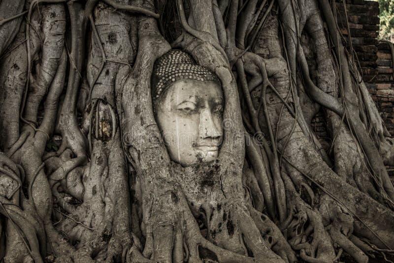 菩萨在树的` s头,阿尤特拉利夫雷斯 库存图片