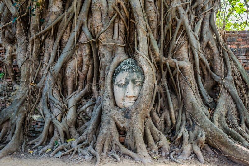 菩萨朝向榕树Wat Mahathat阿尤特拉利夫雷斯曼谷泰国 免版税库存图片