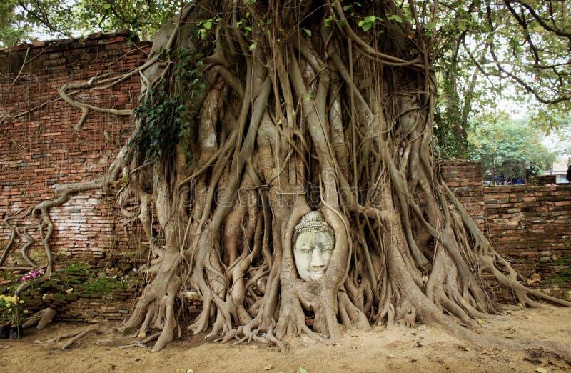 砂岩菩萨头在Ayutthaya,泰国 库存照片