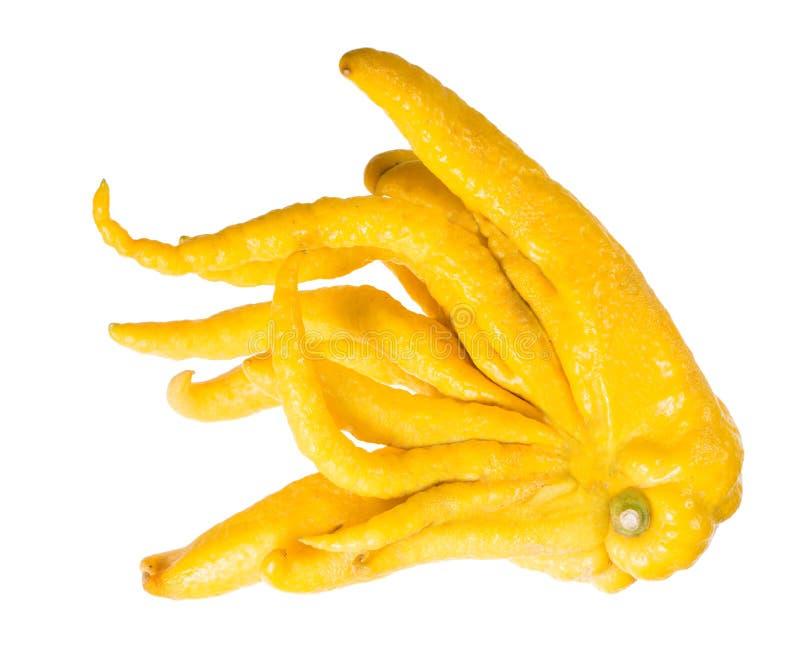 菩萨-异乎寻常的果子柑橘家庭的手 库存照片