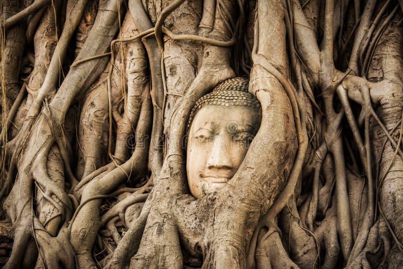 菩萨头树Wat玛哈阿尤特拉利夫雷斯 在Bodhi树根困住的菩萨雕象 ayutthaya历史公园 免版税库存图片