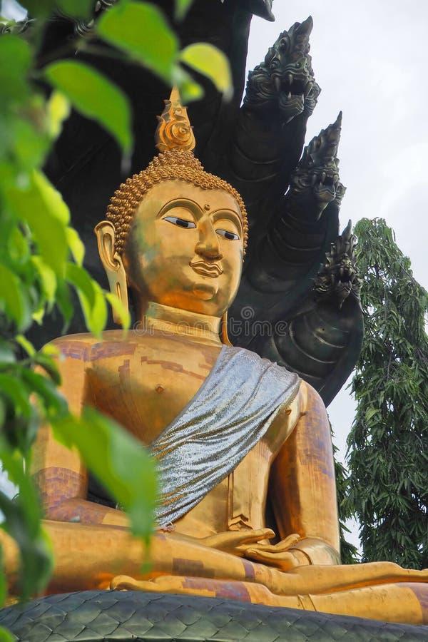 图片 包括有 佛教, 表面, 泰国, 聚会所, 叶子, 金黄, 题头, 宗教