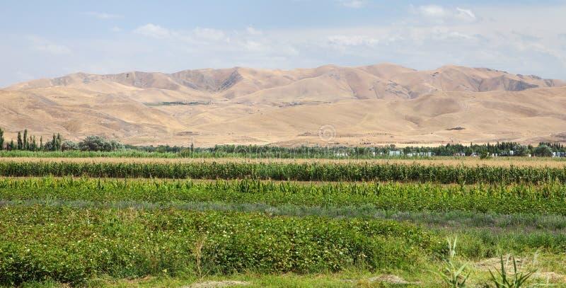 菲尔干纳或Fargona谷在吉尔吉斯斯坦 免版税库存照片