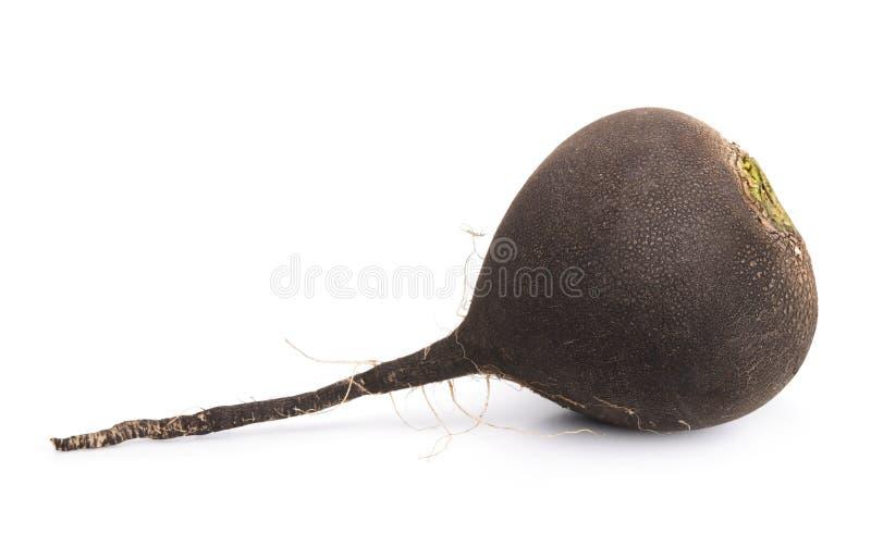 黑萝卜 免版税库存图片