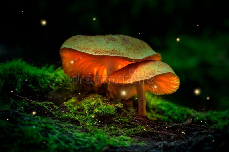 萤火虫和发光的蘑菇在黄昏的一个黑暗的森林里 库存图片