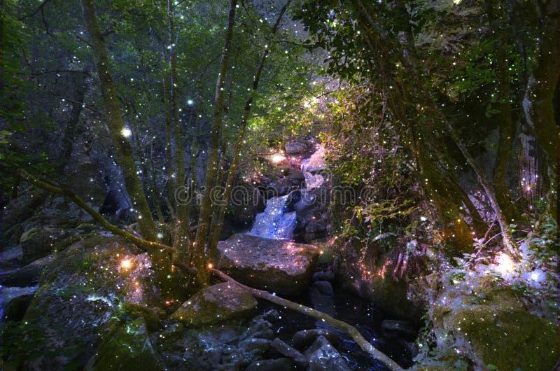 萤火虫的不可思议的森林 免版税库存照片