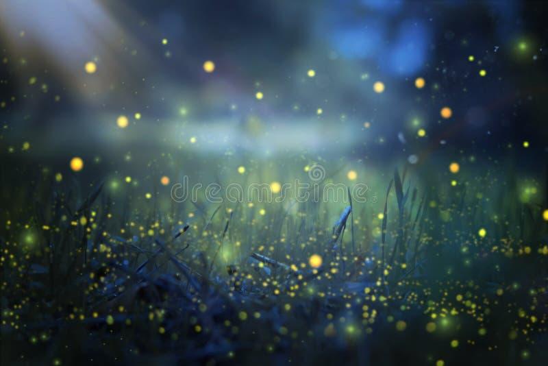 萤火虫飞行的抽象和不可思议的图象在夜森林童话概念的 图库摄影