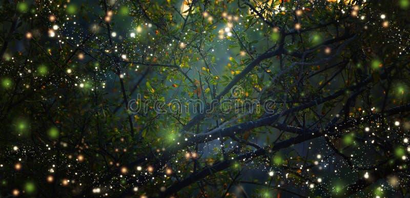萤火虫飞行的抽象和不可思议的图象在夜森林里 库存图片