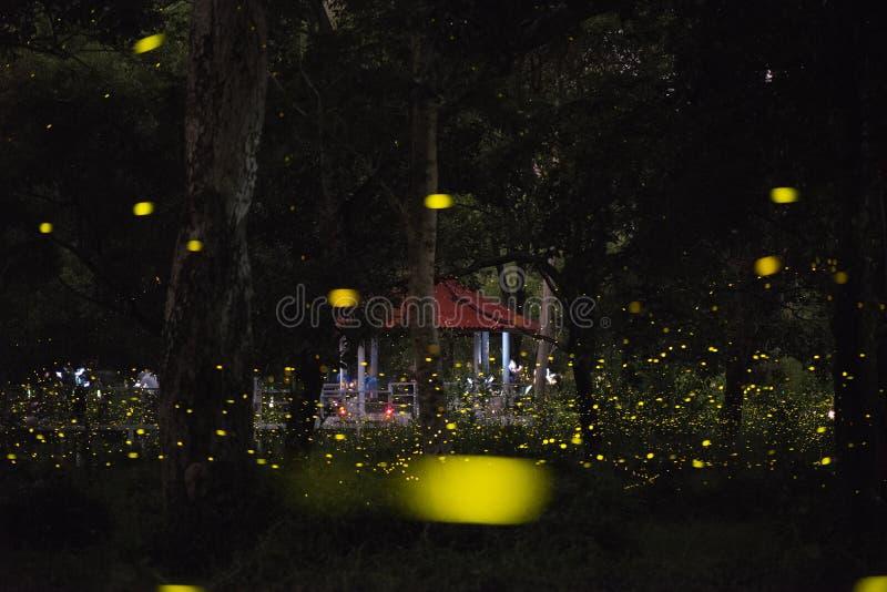 萤火虫飞行的抽象和不可思议的图象在夜森林里 免版税图库摄影